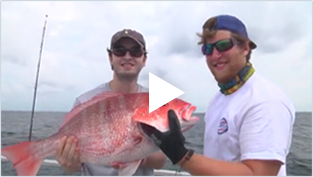 fish in season | gulf coast fishing